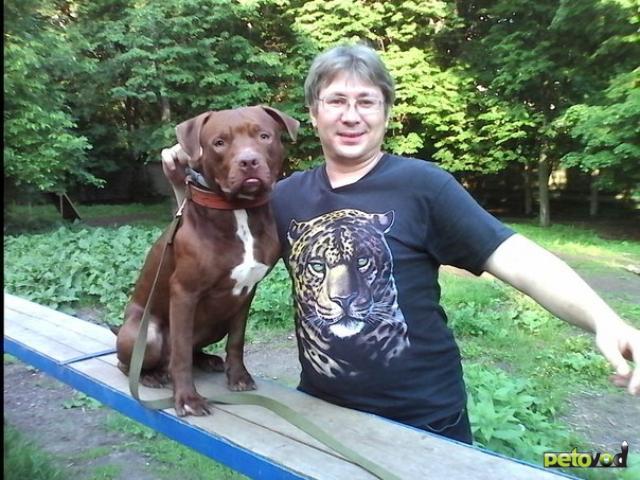 Предлагаю услуги: Кинолог профессиональная дрессировка собак фото4