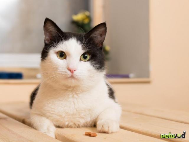 Продаю: Ласковый котик Анатоль ищет дом