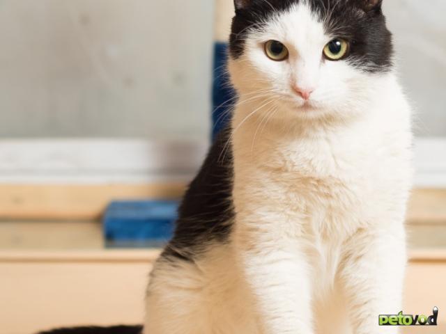 Продаю: Ласковый котик Анатоль ищет дом  фото2