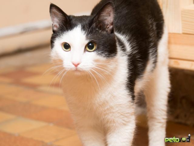 Продаю: Ласковый котик Анатоль ищет дом  фото4