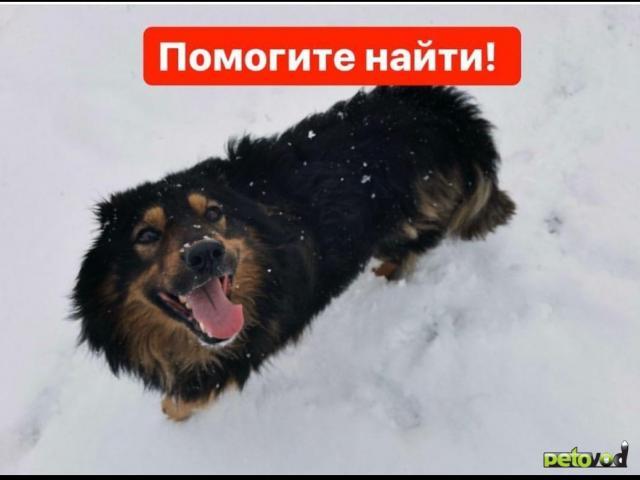 Потерялся/Нашелся: Потерялась собака фото3