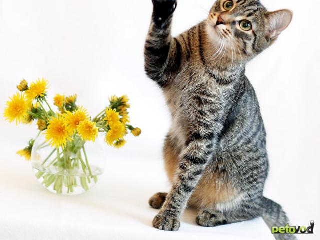 Продаю: 2 кота полосатый Николай и ч/б Кокос ищут дом фото2