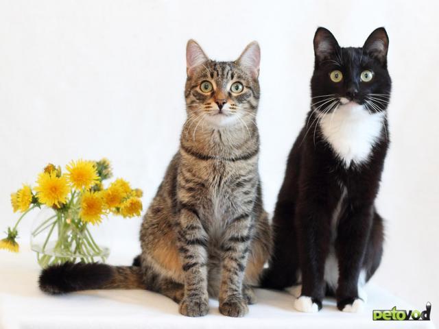 Продаю: 2 кота полосатый Николай и ч/б Кокос ищут дом фото4