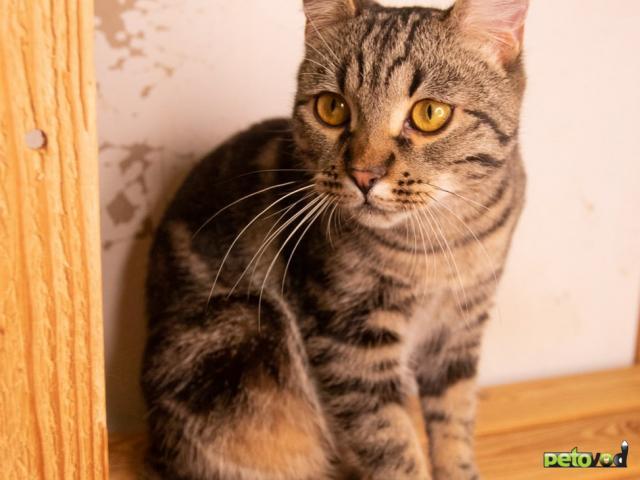 Продаю: Шикарный кот ищет дом фото2