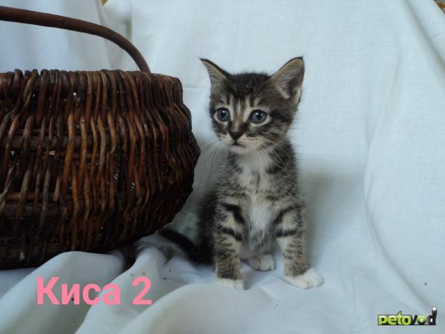 Продаю: Активные котодети ищут своих человеческих мам, пап фото2