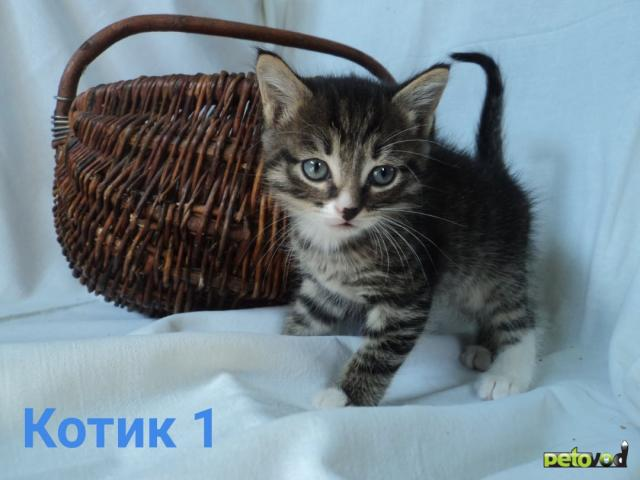 Продаю: Активные котодети ищут своих человеческих мам, пап фото3