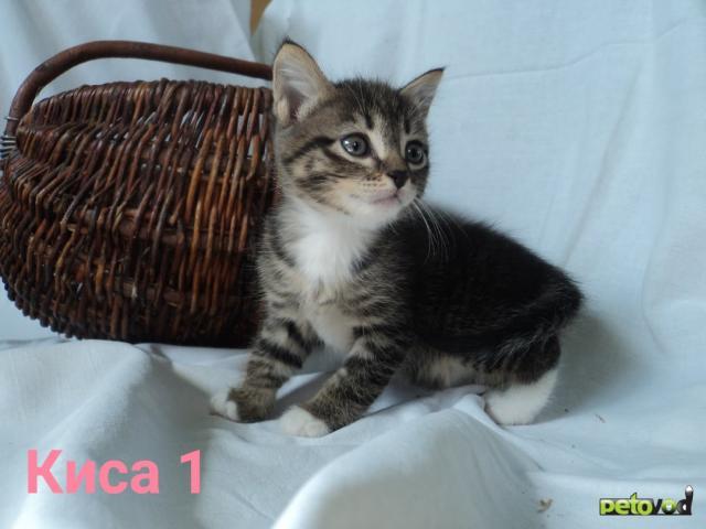 Продаю: Активные котодети ищут своих человеческих мам, пап фото4