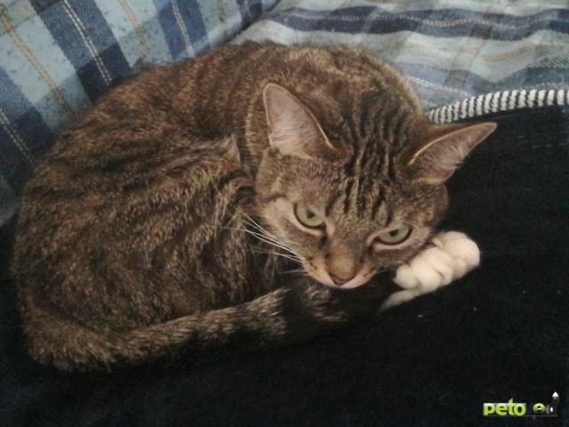 Потерялся/Нашелся: Пропала кошка 6 Красноармейская фото3