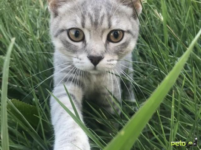 Отдам в дар: Отдам котёнка (девочку) в добрые руки