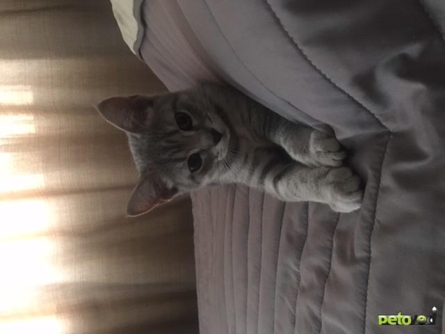 Отдам в дар: Отдам котёнка (девочку) в добрые руки фото3