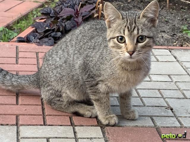 Продаю: Пять котят ( один из них одноглазик) ищут родителей