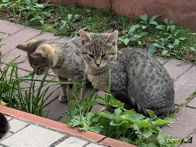 Продаю: Пять котят ( один из них одноглазик) ищут родителей  фото2