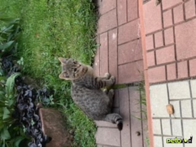 Продаю: Пять котят ( один из них одноглазик) ищут родителей  фото3