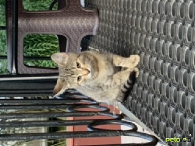Продаю: Пять котят ( один из них одноглазик) ищут родителей  фото4