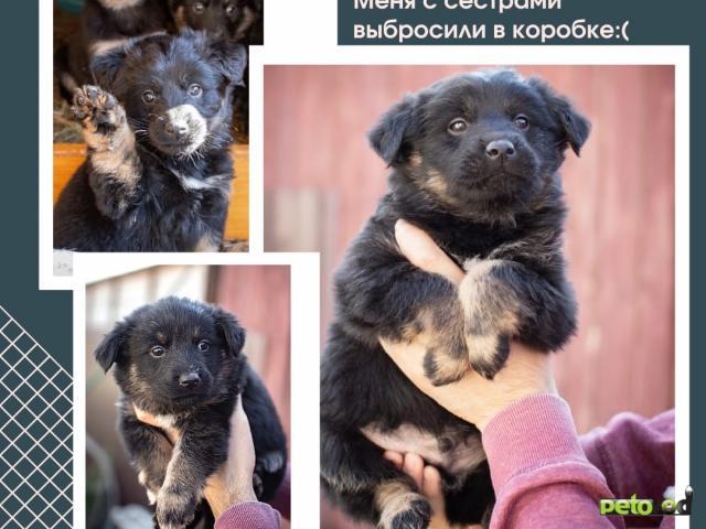 Отдам в дар: Лапочки щенки ищут дом