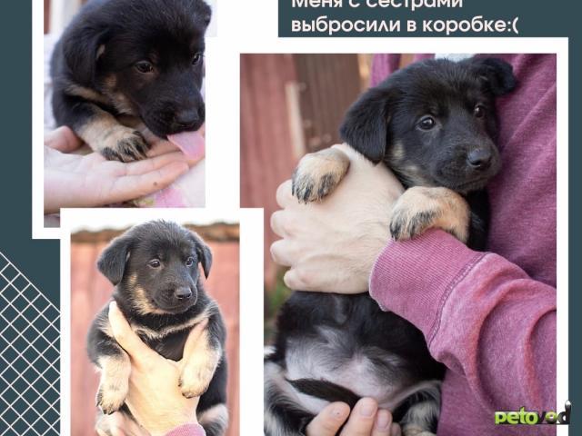 Отдам в дар: Лапочки щенки ищут дом фото2