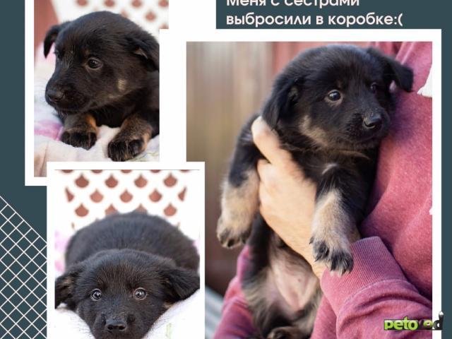 Отдам в дар: Лапочки щенки ищут дом фото3