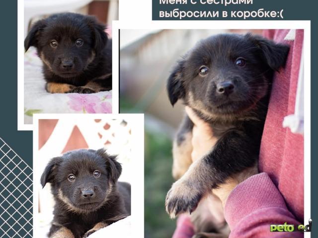 Отдам в дар: Лапочки щенки ищут дом фото4