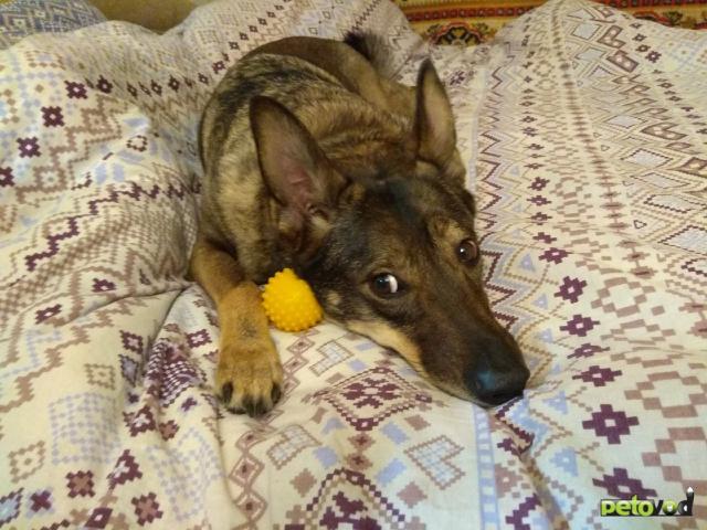 Отдам в дар: Срочно ищет дом собака