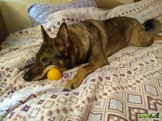 Отдам в дар: Срочно ищет дом собака фото2