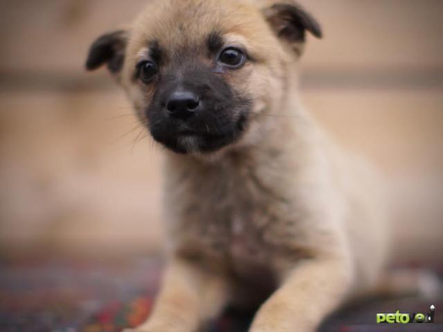 Отдам в дар: Здоровый и весёлый щенок