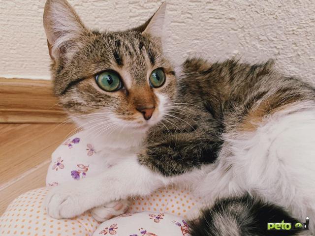 Продаю: Кошечка с изумрудными глазами фото2