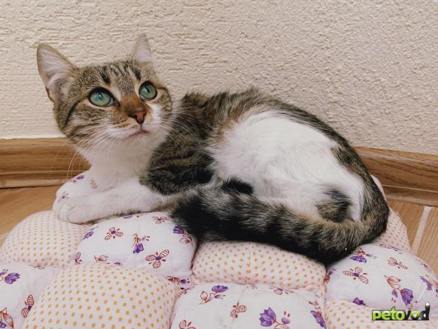Продаю: Кошечка с изумрудными глазами фото3