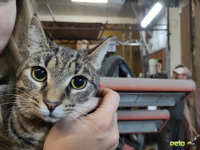 Продаю: Кот в добрые руки  фото3