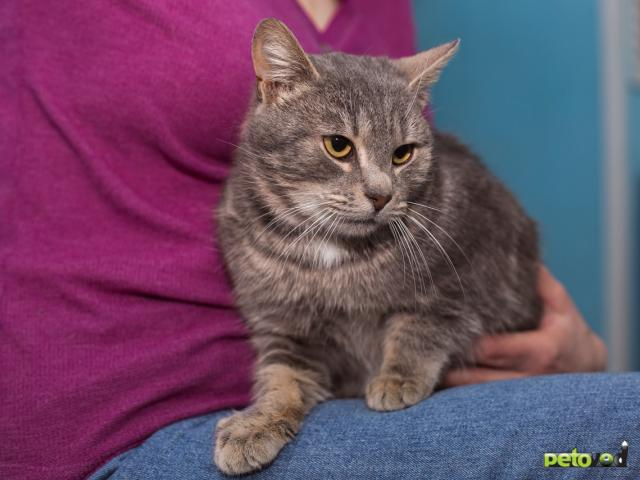 Отдам в дар: Котик Смоки ищет дом фото2