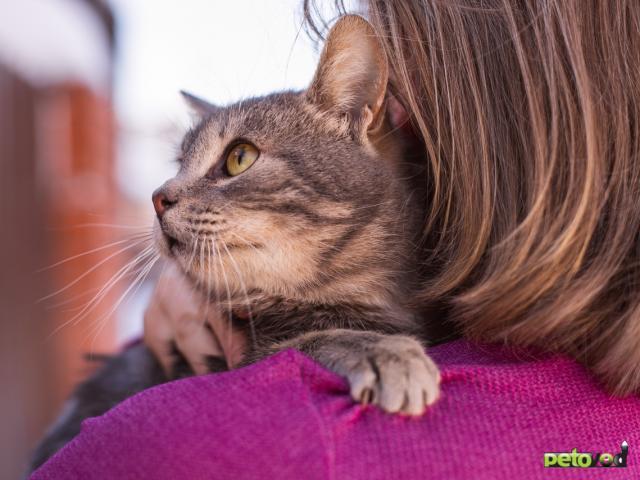 Отдам в дар: Котик Смоки ищет дом фото3