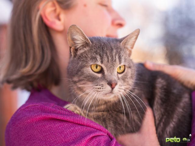Отдам в дар: Котик Смоки ищет дом фото4