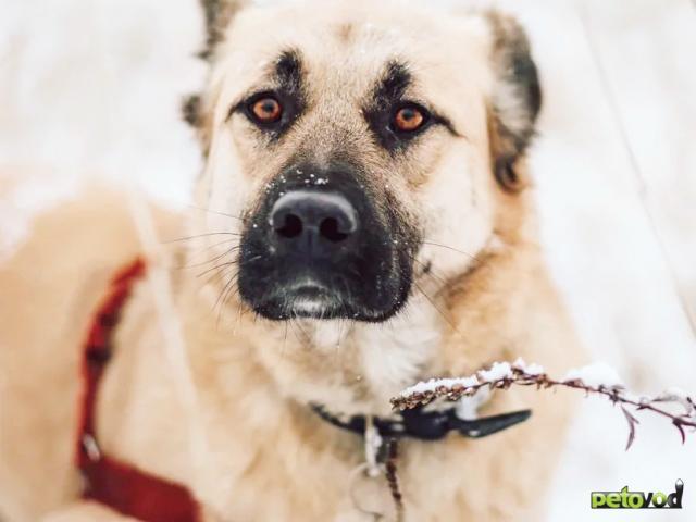 Отдам в дар: Ваш благородный пёс у нас
