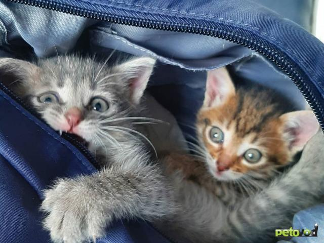 Отдам в дар: Симпатичные котята ищут дом