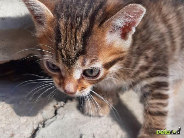 Отдам в дар: Симпатичные котята ищут дом фото2