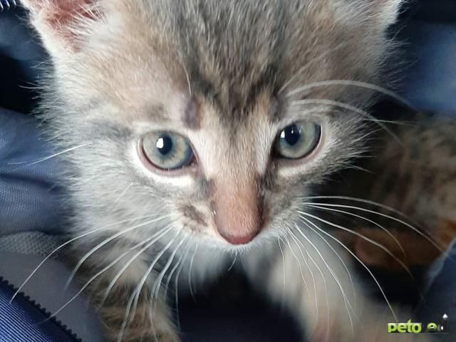 Отдам в дар: Симпатичные котята ищут дом фото3
