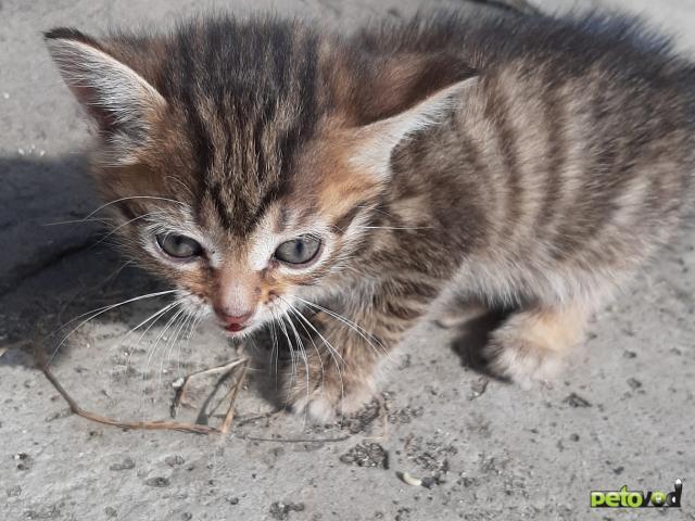 Отдам в дар: Симпатичные котята ищут дом фото4