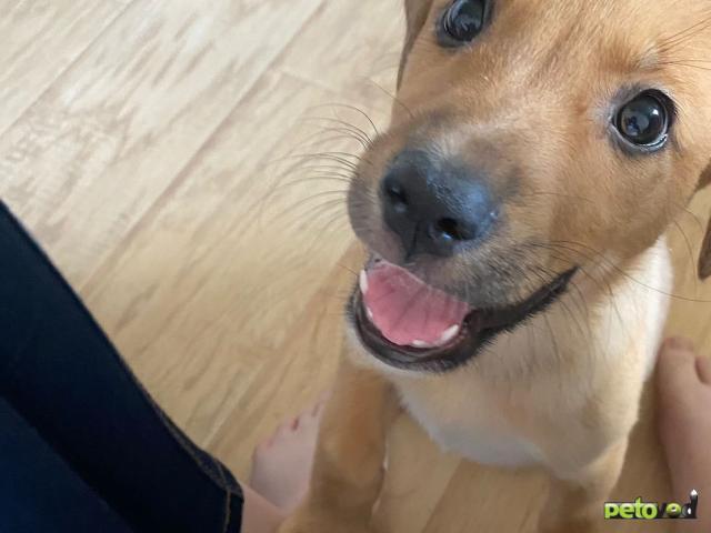 Отдам в дар: Милые щенята в дар фото2