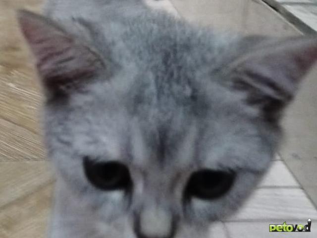 Продаю: ласковый котенок