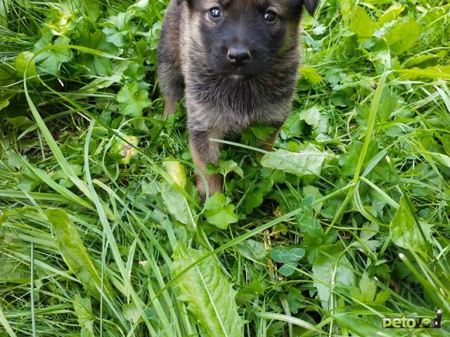 Отдам в дар: Симпатичные, здоровые щенки
