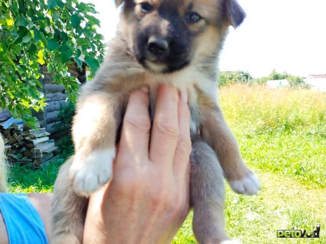 Отдам в дар: Симпатичные, здоровые щенки  фото3