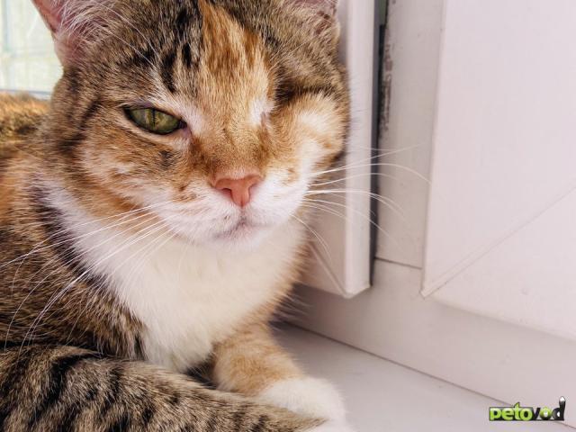 Продаю: Волшебная кошка Лиза в добрые руки