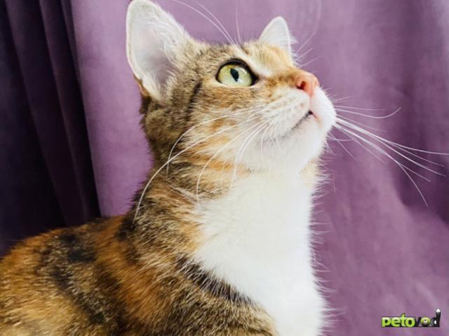 Продаю: Волшебная кошка Лиза в добрые руки фото2