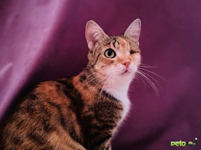 Продаю: Волшебная кошка Лиза в добрые руки фото3