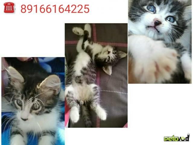 Продаю: Котенок в дар