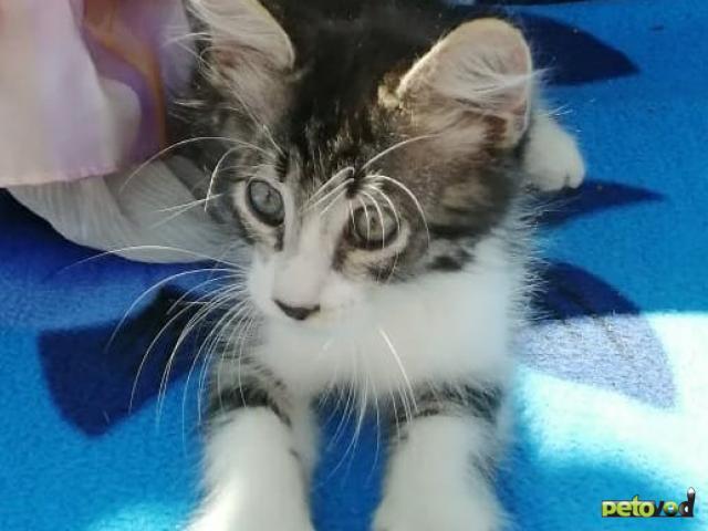 Продаю: Котенок в дар фото2