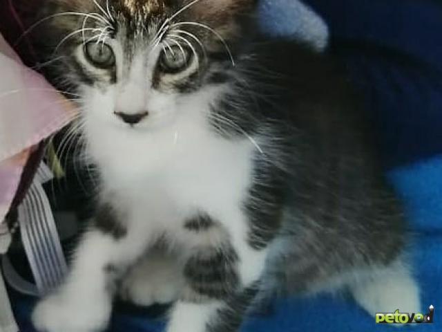 Продаю: Котенок в дар фото3