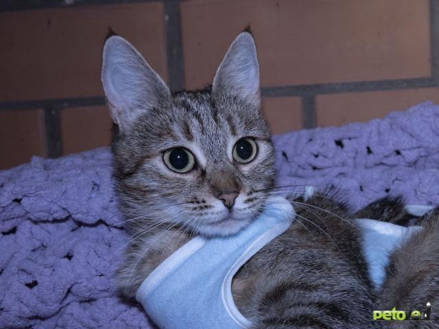 Продаю: Кошка Ева в добрые руки