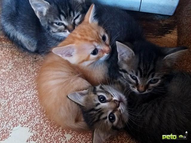 Отдам в дар: Отдадим славных котят в хорошие руки