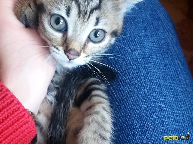 Отдам в дар: Отдадим славных котят в хорошие руки фото4