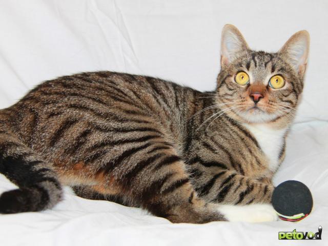Отдам в дар: Кот Степан ищет свое кошачье счастье